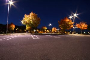 The Best Trees for Your Parking Lot