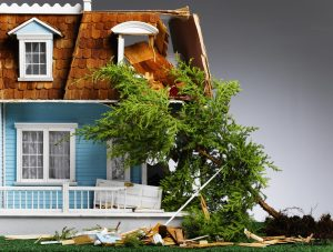 2 Reasons You Might Need Emergency Tree Removal