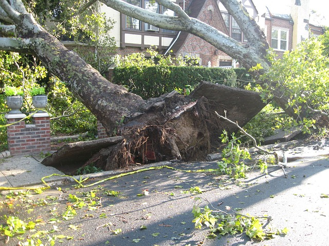 A tree falling and destroying a sidewalk