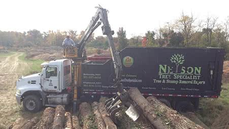 Material handler removing felled trees, Maryland-Washington, DC, Nelson Tree Specialist