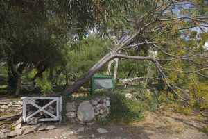3 Tips to Protect Your Trees from Storm Damage