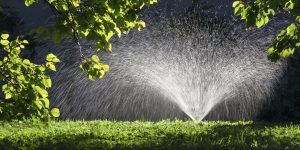 Fall Tree Watering Tips