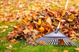 Tips for Clearing Up the Leaves this Fall