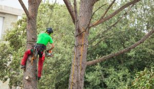 The Importance of Preventative Tree Care