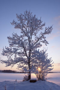 How to Care for Your Trees this Winter