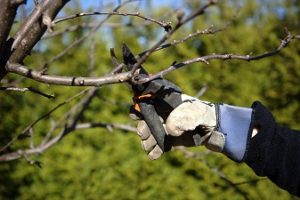 Winter Fruit Tree Care Tips