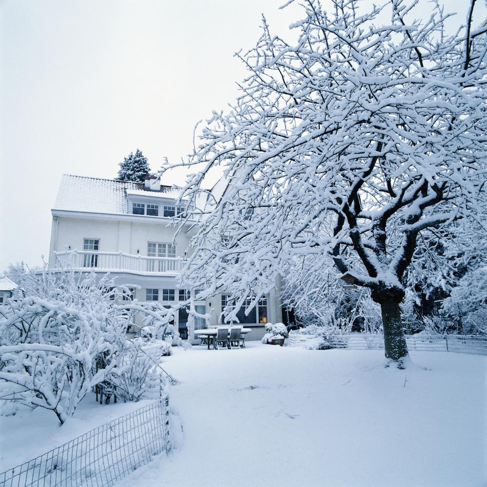 How Do Trees Get Through Winter?