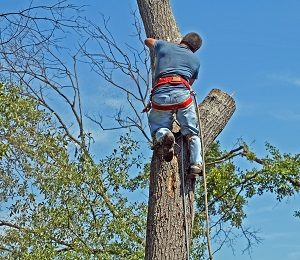 How You Can Benefit from Regular Professional Tree Care