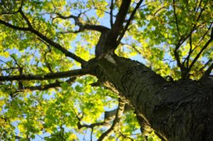3 Reasons to Call a Professional Tree Care Service