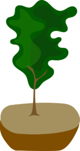 Planting and Caring for New Trees