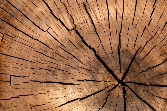 A close-up of a tree stump
