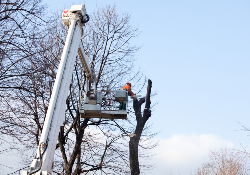 tree crane services in maryland