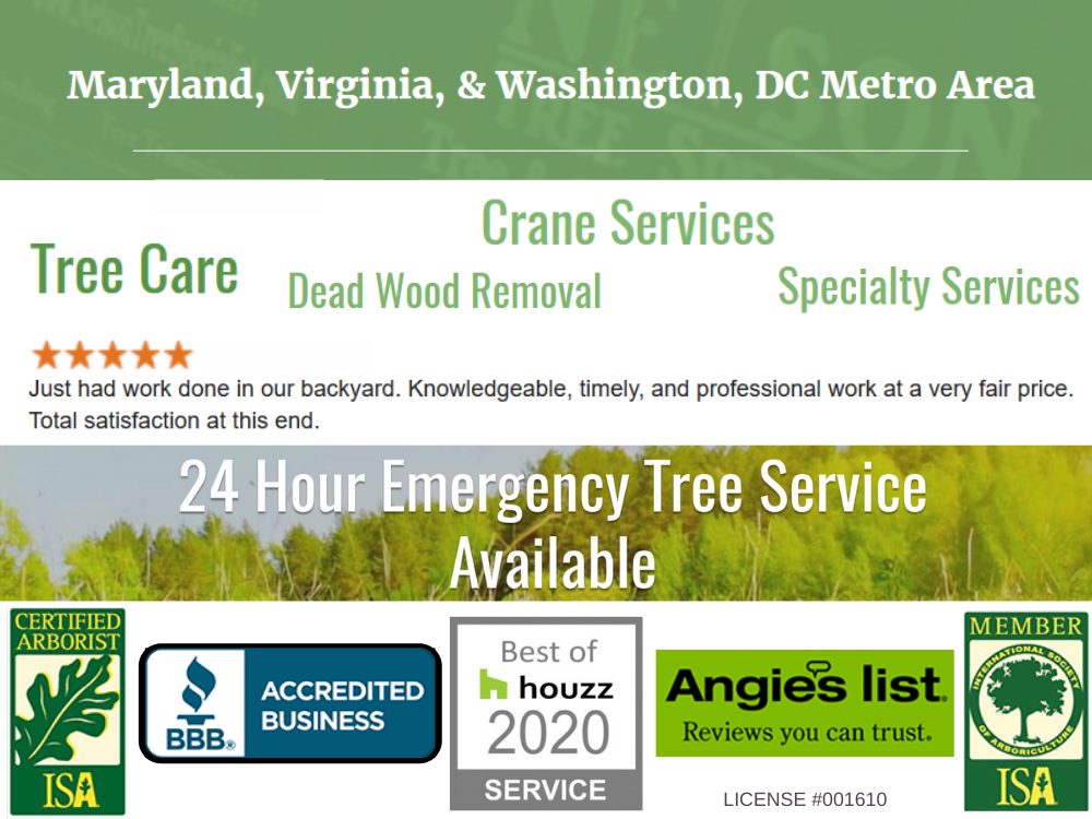 tree care company