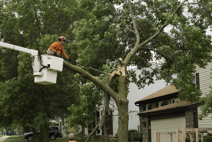 Storm damaged tree gets branch cut